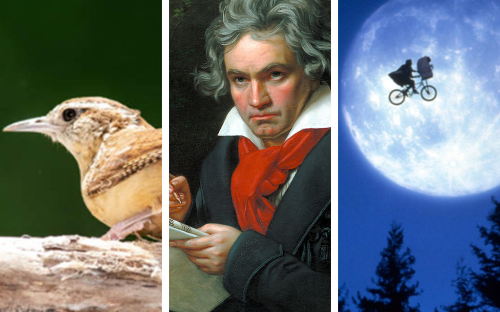 A common wren, Ludwig van Beethoven, and the moonlight ride from E.T.